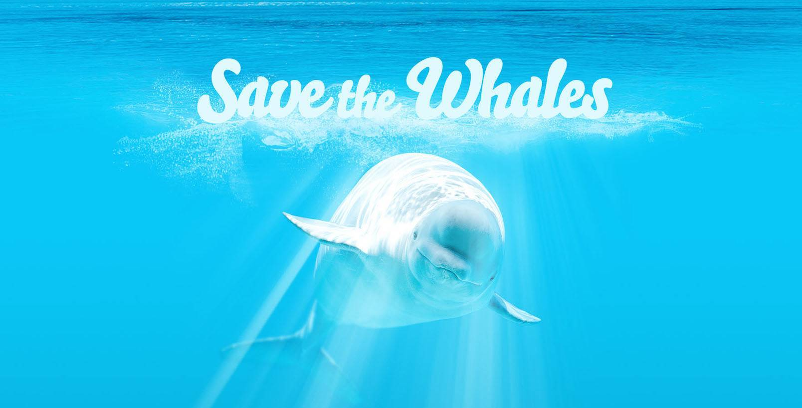 save-the-whales-landing-page